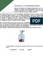 Niveles de protección química