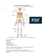 53000040 Ativiadade Avaliativa de Ciencias Ossos e Musculos