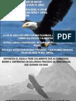 Rom Mrp3 El Aguila