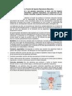 Estructura y Función del Aparato Reproductor Masculino