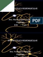 Sinapsis y Placa Neuromuscular i Completa 1202814476308525 3