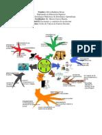 MapaMentalSilviaBalderas.docx