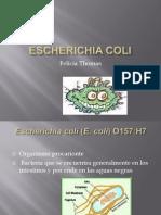 escherichiacoli-091130184721-phpapp01