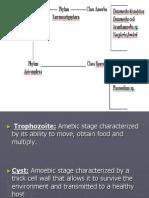 Amoeba and Sporozoa