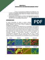 PRACTICA 2 Microbiologia