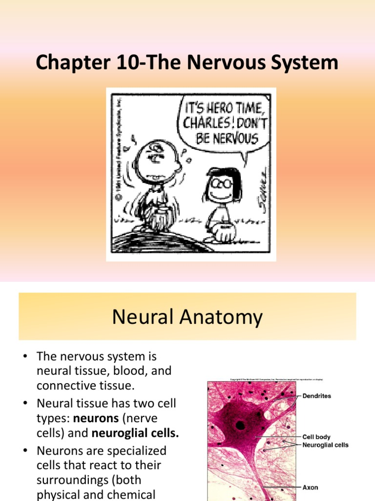 Intro to the Nervous System | Nervous System | Neuron