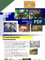 reproduo-nos-animais-1231951414209798-3