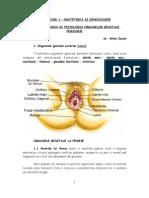 Organele sexuale feminine foto