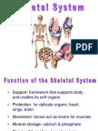 011 Skeletal System