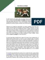 Cómo Educar a un Beagle