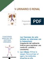 sistemaurinarioorenal-110822173447-phpapp02.pptx