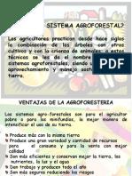 Generaledades Sistema Agroforestal