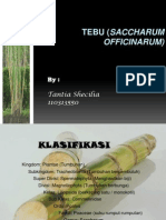 TEBU (Saccharum officinarum)