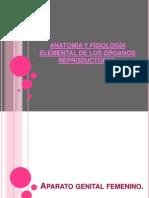 ANATOMÍA Y FISIOLOGÍA ELEMENTAL DE LOS ÓRGANOS REPRODUCTORES
