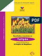 11 Tulipan