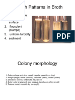 Colony Morphology
