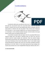 Anatomi Ikan Bawal Hitam.wadjo.12