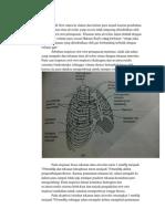 Resume Pneumothorax4