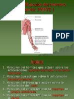 Fundamentos Tema 7. Músculos del miembro superior.ppt