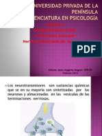 Unidad Neuromuscular