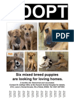 Six Puppy Adoption Flyer
