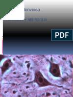 Neurona y Neuroglia 1.Ppt