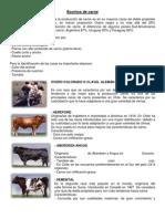 Bovinos de carne.docx