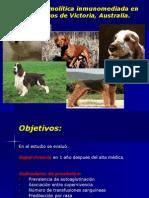Anemia hemolítica inmunomediada en 110 perros de Victoria