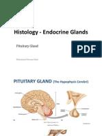 Histo - Pituitary Gland