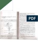 Sindromul Neuronului Motor
