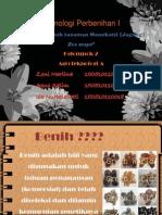 struktur benih tanaman monokotil (jagung)