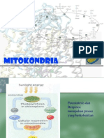 Mitokondria-2009
