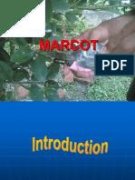 Markot Breeding
