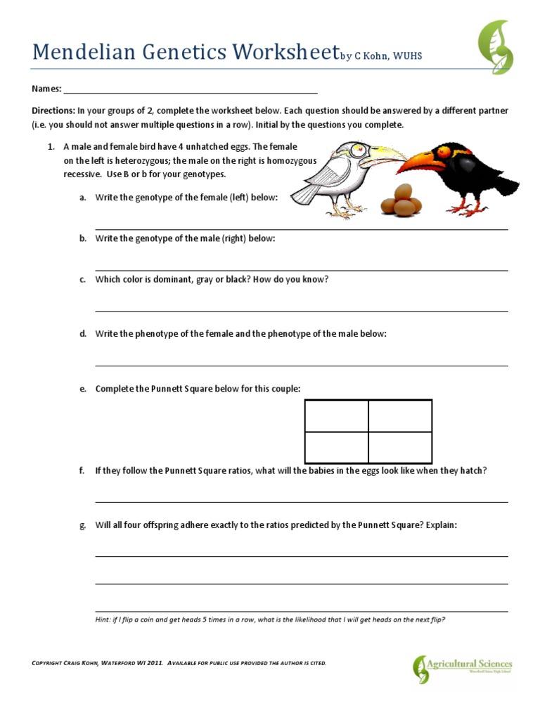 genetics worksheet answers - Boras.winkd.co