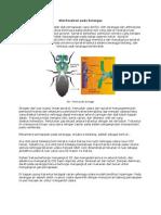 Alat Respirasi Pada Serangga