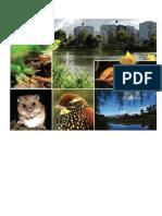 Plan Nacional de Gestion de La Biodiversidad