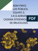 Cadena Epidemiologica de La Brucelosis