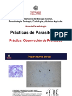 Practicas_parasitologia