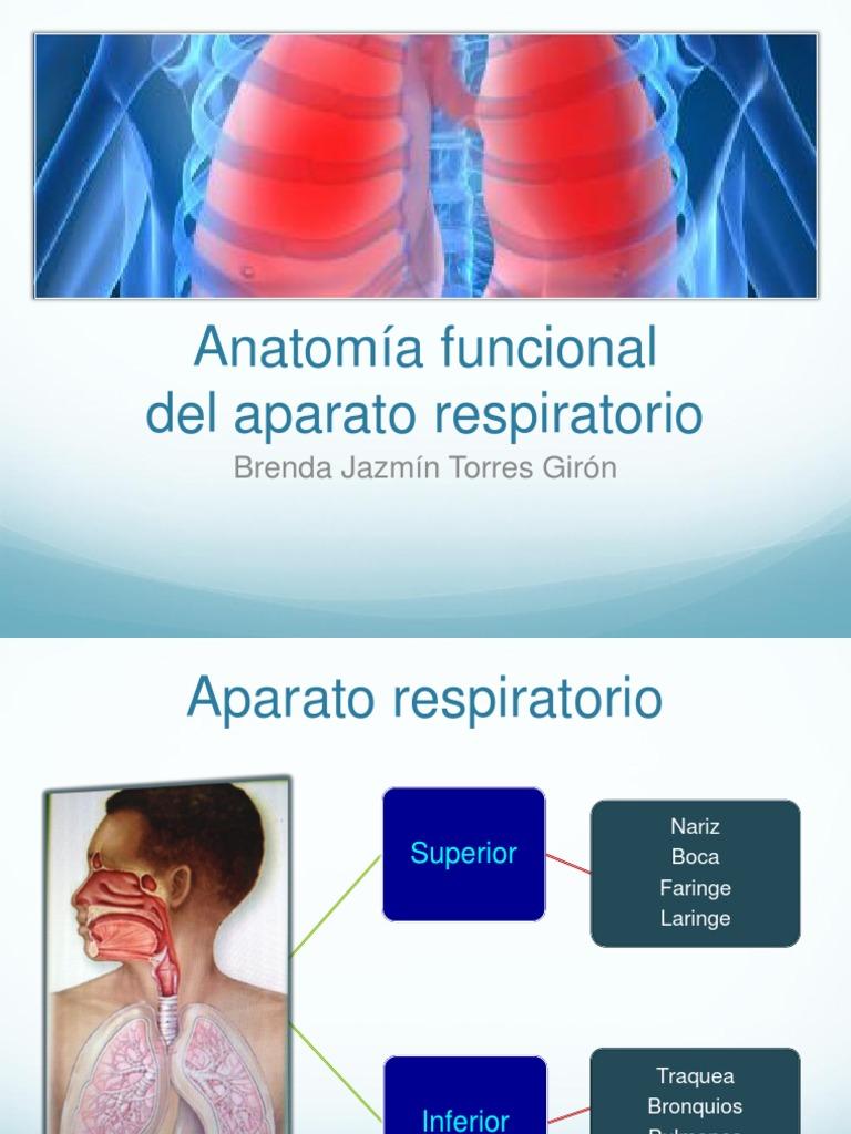 1. anatomía funcional del aparato respiratorio