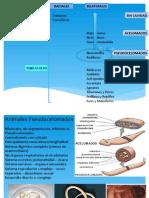 4 Bilaterales Pseudocelomados - Phylum Nematoda