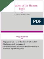Lab 1 - Organisation of the Human Body