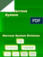 Lab 6 - Nervous System