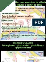 glicobiologia
