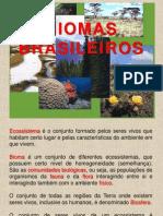 6-anos-biomas-brasileiros power point.ppt