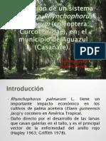 MIP Para Rhynchophorus Palmarum