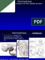 Odontogenese Texto