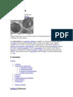 Mitocondria  SANATAIAGO 2
