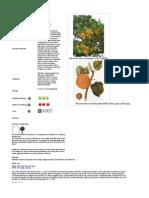 βερυκοκια- ελληνικά δέντρα