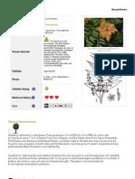 βρωμοδεντρο- ελληνικά δέντρα