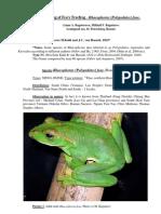 Breeding of Rhacophorus Feae_Aark